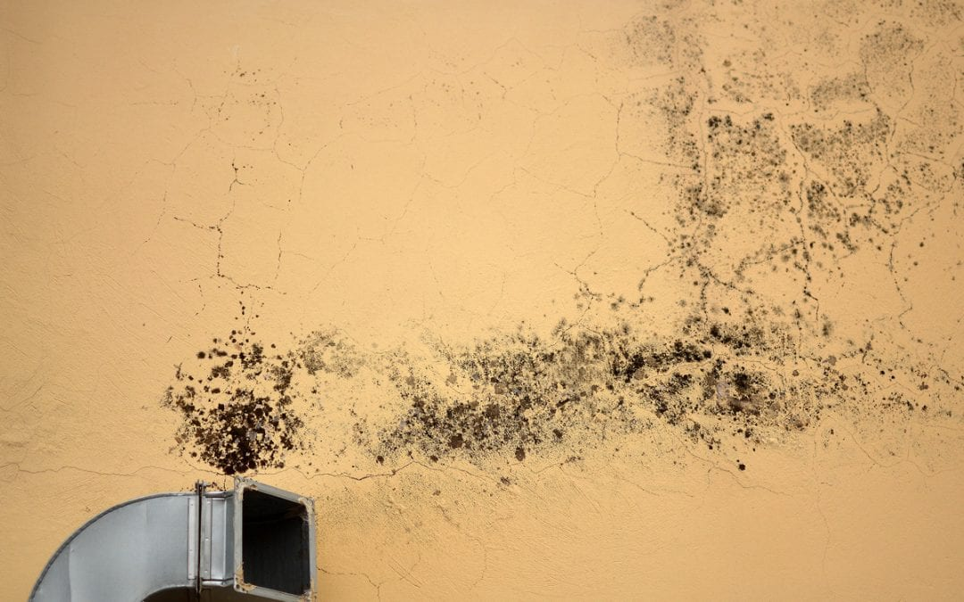 Is There Mold in Your Air Ducts? How to Tell and What to Do About It